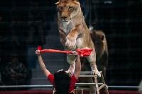 Львы Африки приехали в Тулу, Фото: 108