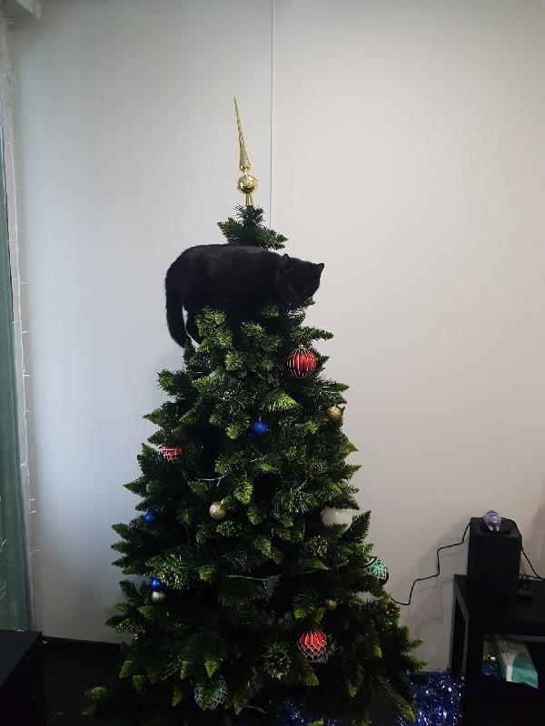 Новогоднее настроение даже у нашего кота Бэтмена