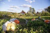 Гигантские тыквы, Фото: 19