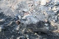 Незаконную свалку на берегу Тулицы спрятали под грудой земли, Фото: 31
