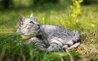Тульские котики, Фото: 15