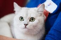 Международная выставка кошек. 16-17 апреля 2016 года, Фото: 82
