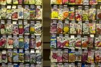 Леруа Мерлен: Какие выбрать семена и правильно ухаживать за рассадой?, Фото: 16