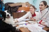Всероссийская выставка собак 2017, Фото: 9