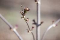Солнечный день в Белоусовском парке, Фото: 14