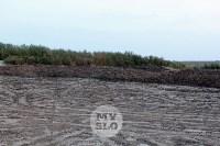 Свалка куриного помета Торхово, Фото: 2
