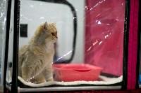 Пряничные кошки, Фото: 28