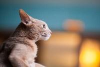 Международная выставка кошек. 16-17 апреля 2016 года, Фото: 32