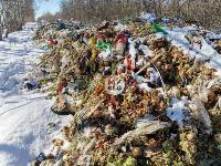 Под Тулой неизвестные сбросили в лесополосе несколько тонн гнилых овощей, Фото: 5