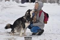 Праздник северных собак на Куликовом поле , Фото: 11