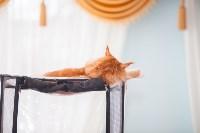 Международная выставка кошек. 16-17 апреля 2016 года, Фото: 70