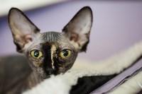 В Туле прошла выставка «Пряничные кошки» , Фото: 18