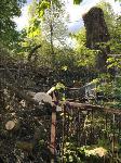 В Черни во время уборки на кладбище могилы завалили спиленными деревьями, Фото: 2