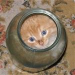 Жидкие коты, Фото: 11