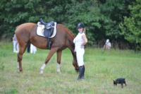 В Ясной поляне стартовал турнир по конному спорту, Фото: 141