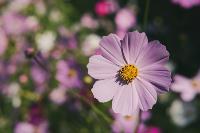 Летний день в богородицком парке, Фото: 59