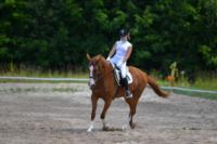 В Ясной поляне стартовал турнир по конному спорту, Фото: 128