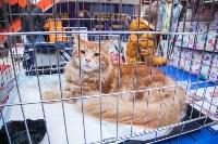 Выставка кошек в МАКСИ, Фото: 2