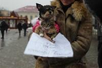 Более 8000 туляков требуют запретить убийство бездомных животных, Фото: 32
