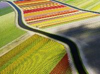 Поля тюльпанов в Нидерландах. Anders Andersson, Фото: 12