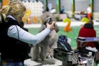 Выставка собак в Туле 14.04.19, Фото: 50