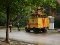 Упавшее дерево в Криволучье, Фото: 2