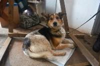 Праздник северных собак на Куликовом поле , Фото: 118