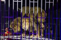 Шоу фонтанов «13 месяцев» в Тульском цирке – подарите себе и близким путевку в сказку!, Фото: 69