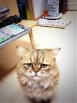 Грустный кот, Фото: 3