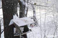 Зимняя сказка Платновского парка, Фото: 7