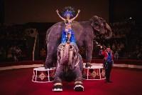 «Шоу Слонов» в Тульском цирке, Фото: 20