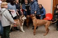 """Выставки собак в ДК """"Косогорец"""", Фото: 49"""