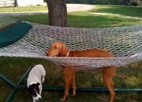 Кошки и собаки, проигравшие битву с мебелью, Фото: 8