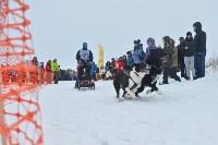 Праздник северных собак на Куликовом поле , Фото: 75