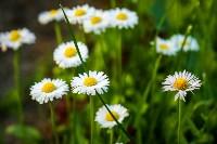 Фестиваль крапивы: пятьдесят оттенков лета!, Фото: 107