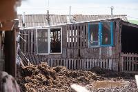 Коровы, свиньи и горы навоза в деревне Кукуй: Роспотреб требует запрета деятельности токсичной фермы, Фото: 5