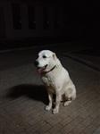 Пропала собака, Фото: 2