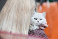 Выставка кошек в МАКСИ, Фото: 17