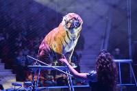 Цирковое шоу, Фото: 115