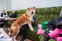 Всероссийская выставка собак 2017, Фото: 30