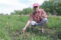 Юрий Жоев: кимовский фермер выращивает королевское лакомство, Фото: 4