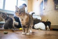 Волонтеры спасли кошек из адской квартиры, Фото: 38