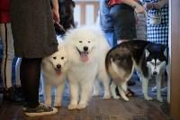 Выставка собак в Туле, 29.11.2015, Фото: 25