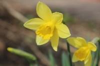 Краски весны в Туле, Фото: 32