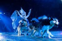 Шоу фонтанов «13 месяцев»: успей увидеть уникальную программу в Тульском цирке, Фото: 146