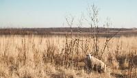 Семён Яблоновский и его ферма, Фото: 25