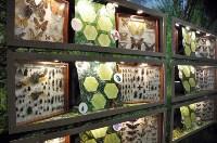 Экспозиция тропических насекомых в Тульском экзотариуме, Фото: 1