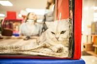 """Выставка """"Пряничные кошки"""". 15-16 августа 2015 года., Фото: 125"""