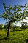 Летний день в Ясной Поляне, Фото: 32