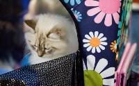 Выставка кошек. 4 и 5 апреля 2015 года в ГКЗ., Фото: 34